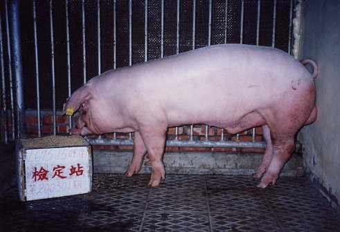 中央畜產會200301期L0695-15拍賣照片