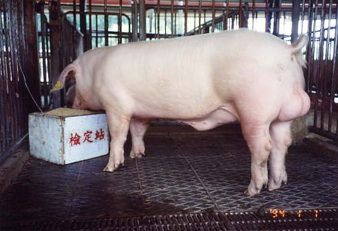 中央畜產會200301期L1639-10拍賣照片