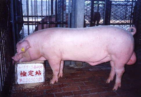 中央畜產會200303期L0159-03拍賣照片