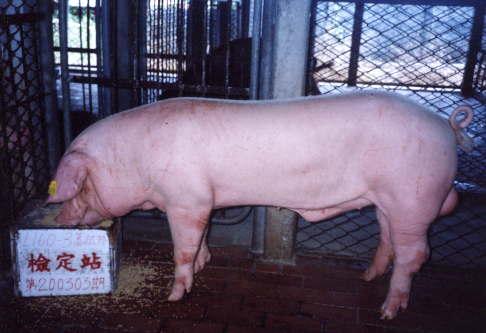 中央畜產會200303期L0160-03拍賣照片