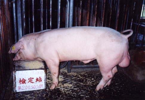 中央畜產會200303期L0718-18拍賣照片