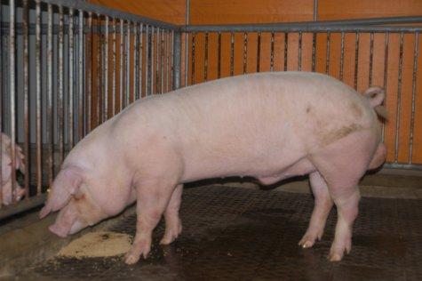 中央畜產會200303期L0760-04體型-全身相片