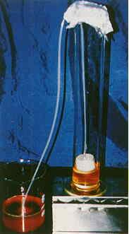 胚的收取及處理 - 虹吸上層的回收沖洗液