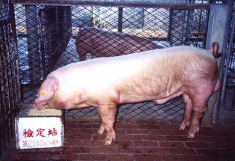 中央畜產會200303期L0761-01拍賣照片