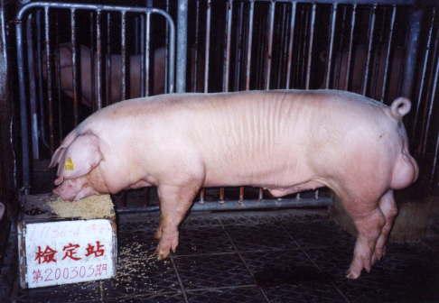 中央畜產會200303期L1136-04拍賣照片