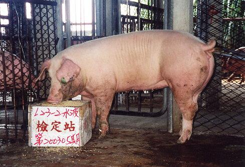 中央畜產會200305期L0023-02拍賣照片