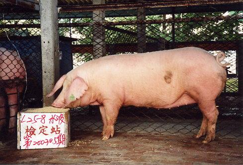 中央畜產會200305期L0025-08拍賣照片