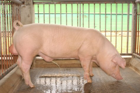 中央畜產會200305期L0511-09體型-全身相片