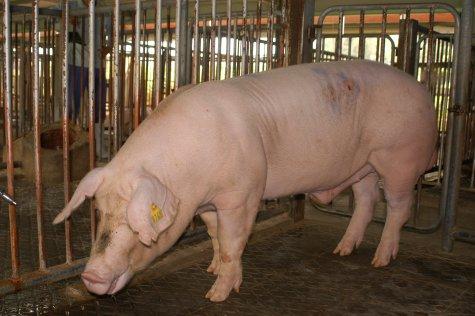 中央畜產會200305期L0745-10體型-全身相片