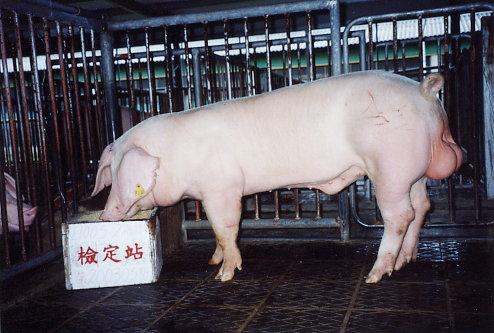 中央畜產會200305期L1005-02拍賣照片