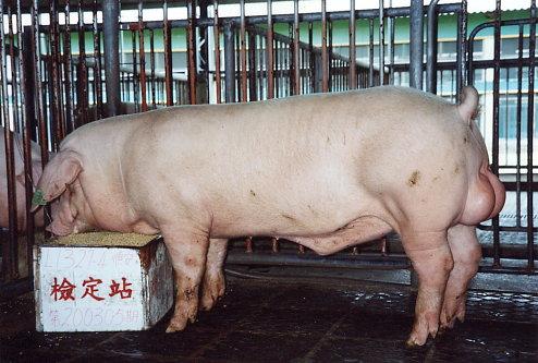 中央畜產會200305期L1327-04拍賣照片