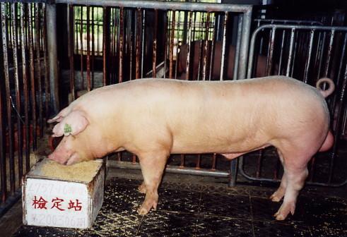 中央畜產會200306期L0757-16拍賣照片