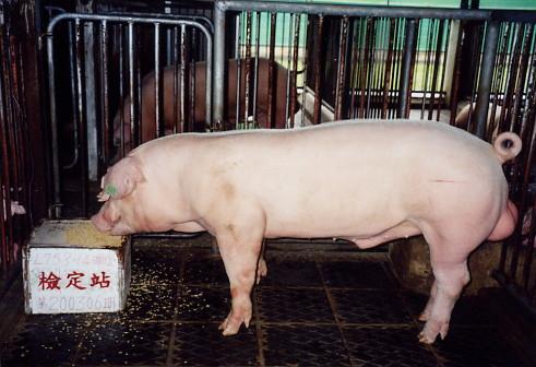 中央畜產會200306期L0758-14拍賣照片