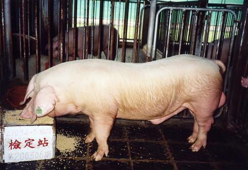 中央畜產會200306期L1034-05拍賣照片