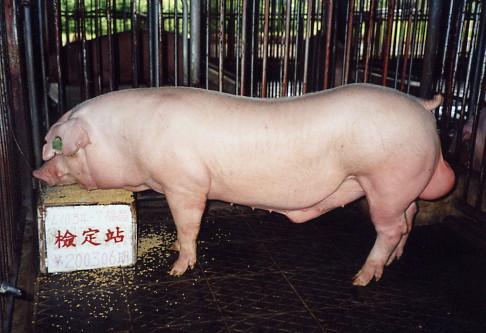 V中央畜產會200306期L1034-07拍賣照片