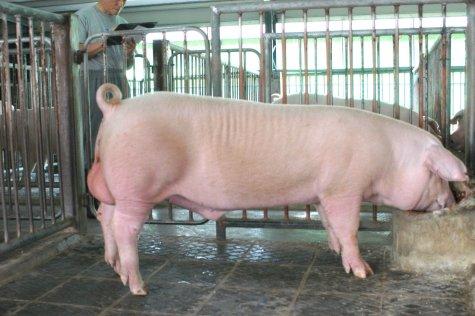 中央畜產會200306期L1361-03體型-全身相片