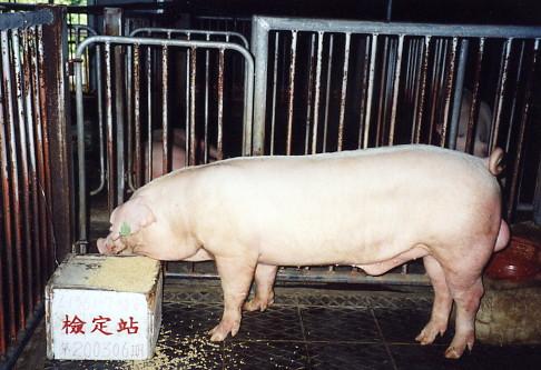 中央畜產會200306期L1361-07拍賣照片