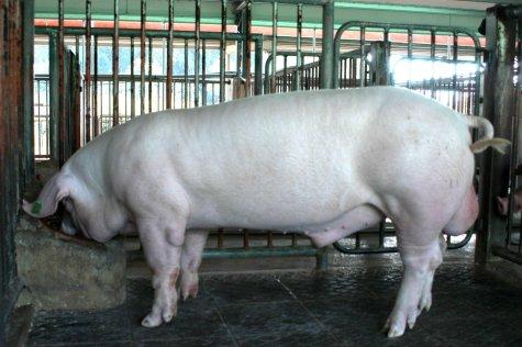 中央畜產會200306期L1646-10體型-全身相片