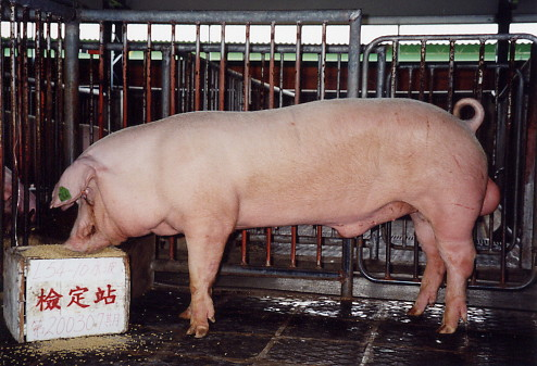中央畜產會200307期L0054-10拍賣照片