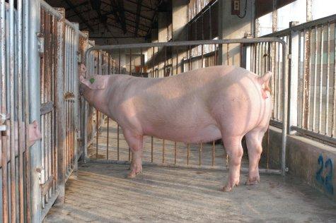 中央畜產會200307期L0060-01體型-全身相片