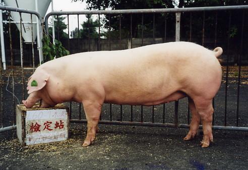 中央畜產會200307期L0060-01拍賣照片