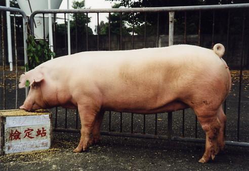 中央畜產會200307期L0542-01拍賣照片