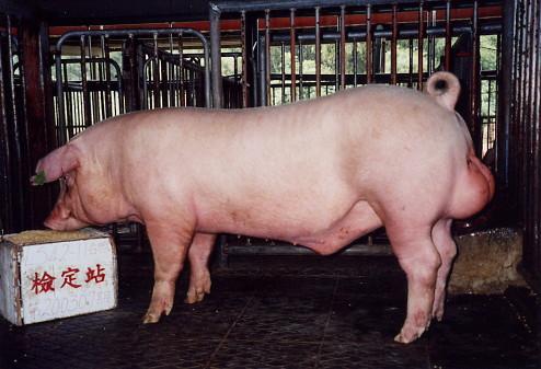 中央畜產會200307期L0542-11拍賣照片