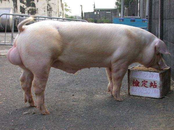 中央畜產會200307期L0769-12拍賣照片