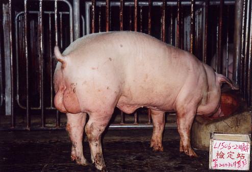 中央畜產會200307期L1506-02拍賣照片