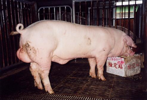 中央畜產會200307期L1662-07拍賣照片