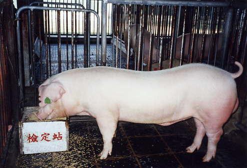 中央畜產會200309期L0070-09拍賣照片