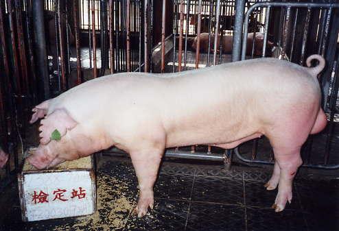 中央畜產會200309期L0588-07拍賣照片