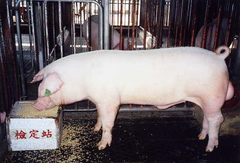 中央畜產會200309期L0818-10拍賣照片