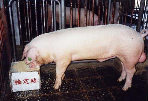 中央畜產會200309期L0930-11拍賣照片