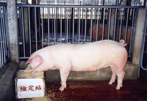 中央畜產會200309期L1096-11拍賣照片