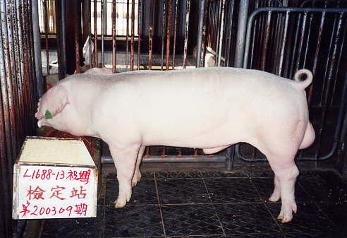 中央畜產會200309期L1688-13拍賣照片