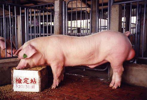 中央畜產會200311期L0077-09拍賣照片