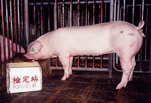 中央畜產會200311期L0088-10拍賣照片