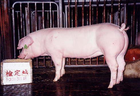 中央畜產會200311期L0138-04拍賣照片