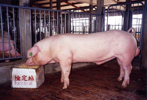 中央畜產會200311期L0814-16拍賣照片