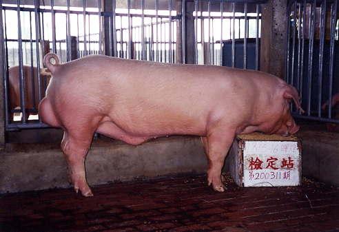 中央畜產會200311期L0815-16拍賣照片