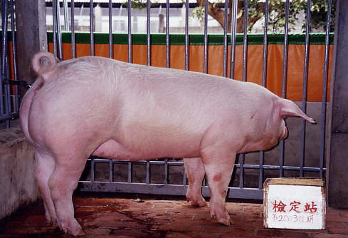 中央畜產會200311期L1006-14拍賣照片