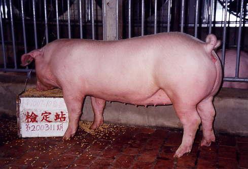 中央畜產會200311期L1007-10拍賣照片