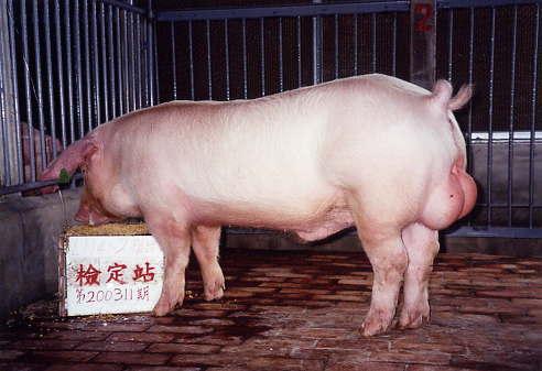 中央畜產會200311期L1141-02拍賣照片