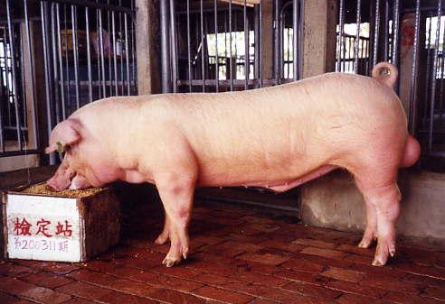 中央畜產會200311期L1635-04拍賣照片