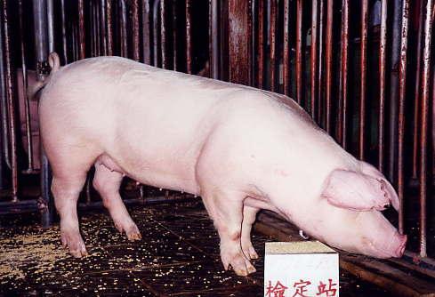 中央畜產會200311期L1724-04拍賣照片