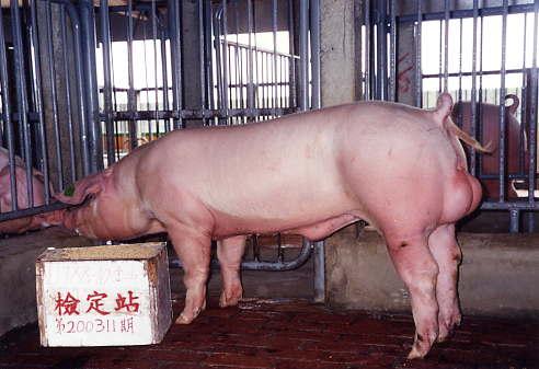 中央畜產會200311期L1788-10拍賣照片