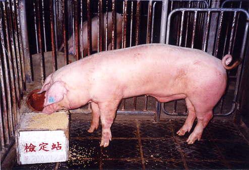 中央畜產會200312期L0096-04拍賣照片