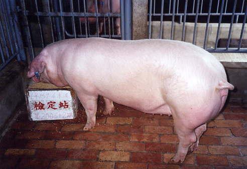 中央畜產會200312期L0159-04拍賣照片