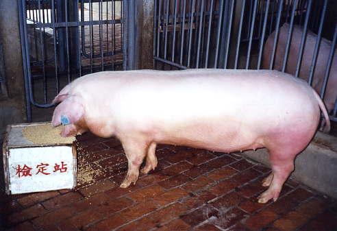 中央畜產會200312期L0828-03拍賣照片